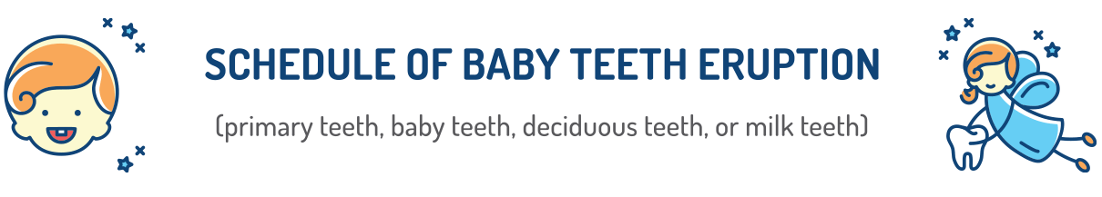 Schedule of Baby Teeth Eruption